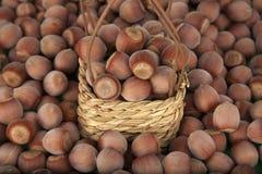 Wicker basket with hazelnuts. Wicker basket full of  hazelnuts Stock Photography