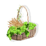 Wicker basket with hops and malt Stock Image