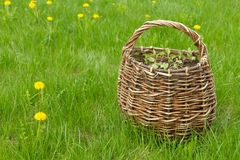 Wicker basket on the lawn Royalty Free Stock Images