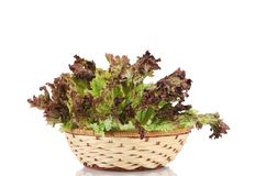 Wicker basket with lettuce. Stock Photo