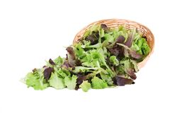 Wicker basket with lettuce leaves. Royalty Free Stock Photos