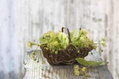 Wicker basket with linden flowers on grey wooden table on an old blur wall white background Royalty Free Stock Photography