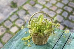 Wicker basket with linden flowers on green wooden table on an old cobblestone with greenery background Royalty Free Stock Photography