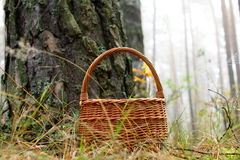 Wicker basket with a maple leaf in a pine forest Royalty Free Stock Image