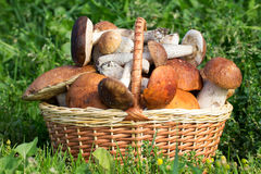 Wicker basket with mushrooms Royalty Free Stock Images