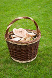 Wicker basket with mushrooms Stock Image