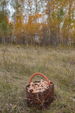 A wicker basket with mushrooms Royalty Free Stock Photo