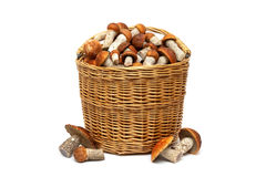 Wicker basket with mushrooms on a white background Stock Images