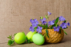 Wicker basket with periwinkle and Easter eggs Royalty Free Stock Images