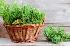 Wicker basket with pine branches and cone. Winter home decoration. Alternative medicine and herbal remedy concept. Selective focus Stock Image