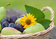 Wicker basket with plums and pears Stock Photography