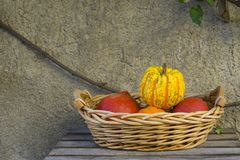 Wicker basket with pumpkins against concrete background royalty free stock photo