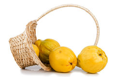 Wicker basket with quinces Stock Image