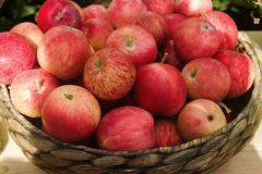 Wicker basket with raw organic red apples on autumnal seasonal farmer`s marke. T, selective focus Stock Photo