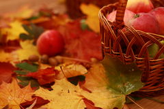 Wicker basket of red apples on the background of autumn leaves stock images