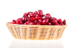 Wicker basket with red dogwood berries. Royalty Free Stock Photography