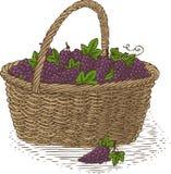 Wicker Basket with Ripe Grape Stock Photo