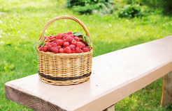 Wicker basket with ripe raspberry on the bench Stock Images