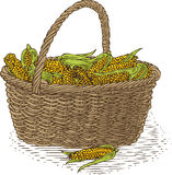 Wicker Basket with Ripe Yellow Corn. Isolated on a White Background Royalty Free Stock Photo