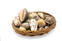 Wicker Basket and Sea Shells. Wicker basket filled with assorted seashells royalty free stock photography