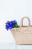 Wicker basket with spring flowers Royalty Free Stock Image