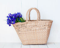 Wicker basket with spring flowers Royalty Free Stock Photography