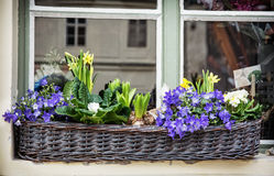 Wicker basket with spring flowers on the window Stock Image