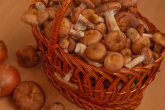 Wicker basket stuffed with mushrooms stock photography