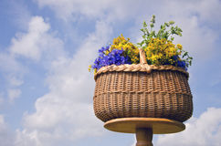 Wicker basket on table with midsummer medical herb flowers Stock Photo