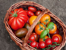 Wicker basket with tomatoes Stock Photography