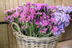 In a wicker basket variety of limonium sinuatum or statice salem flowers in pink, lilac, violet colors in the garden shop. Horizontal Royalty Free Stock Photo