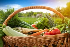 Wicker basket with vegetable Stock Photography