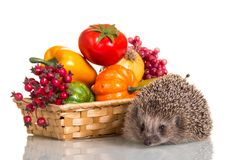 Wicker basket with vegetables and berries, close-up of hedgehog royalty free stock photography