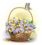 Wicker basket with violets. Stock Photos