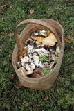 The Wicker basket of wild mushrooms standing on the grass in the woods Stock Image