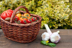 Wicker Basket With Tomatoes Royalty Free Stock Image