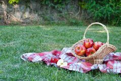 Wicker basket is woven of vines with apples on the background of green grass tablecloth, cloth in a cage towel, red ripe yellow fr stock photography