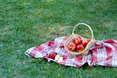 Wicker basket is woven of vines with apples on the background of green grass tablecloth, cloth in a cage towel, red ripe yellow fr stock image