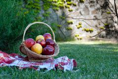 Wicker basket is woven of vines with apples on the background of green grass tablecloth, cloth in a cage towel,yellow red ripe fru royalty free stock photography