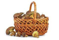 Wicker basket with yellow boletus mushrooms near. Royalty Free Stock Photo