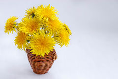 Wicker basket with yellow dandelions on white background. Brown wicker basket with yellow dandelions on white background Royalty Free Stock Photo
