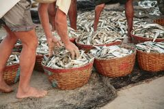 Wicker baskets with fresh fish Stock Images
