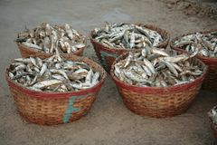 Wicker baskets with fresh fish Royalty Free Stock Photo