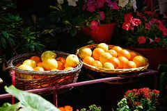 Oranges in wicker baskets, Mdina. Royalty Free Stock Photo