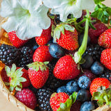 Wicker Bowl with a garden of colorful harvest  berries, decorated  flower petunia Royalty Free Stock Photos