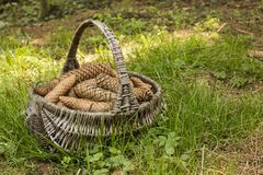 Wicker busket Stock Images