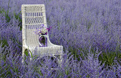Wicker chair in Russian Sage Royalty Free Stock Image