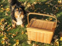 Wicker and dog Royalty Free Stock Image