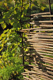 Wicker fence in the garden. Royalty Free Stock Image