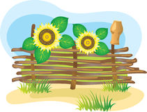 Wicker fence and sunflowers. Royalty Free Stock Photography